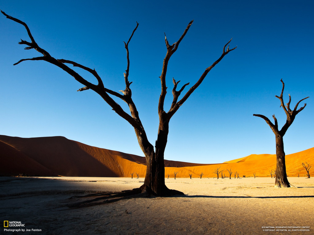 alone tree national geographic adventure