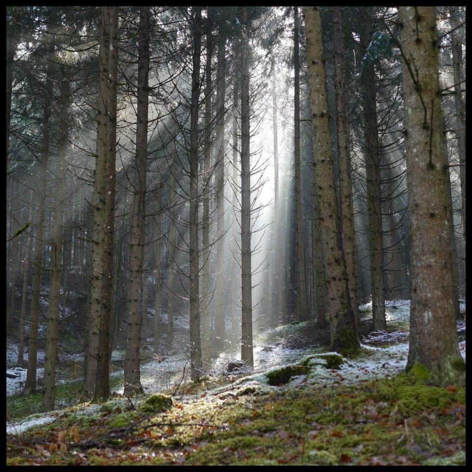 albero e luce